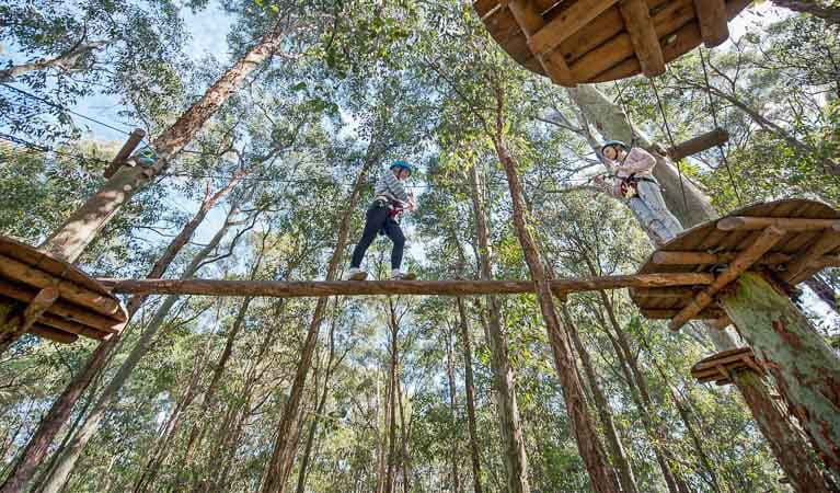 Activities at Tree Top Adventure, Blue Gum Hills Regional Park. Photo: Tree Top Adventure Park