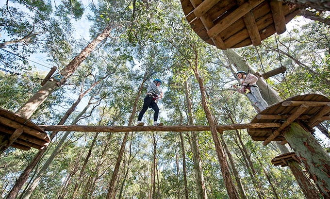 Tree Top Adventure Park, Blue Gum Hills Regional Park. Photo: Tree Top Adventure Park