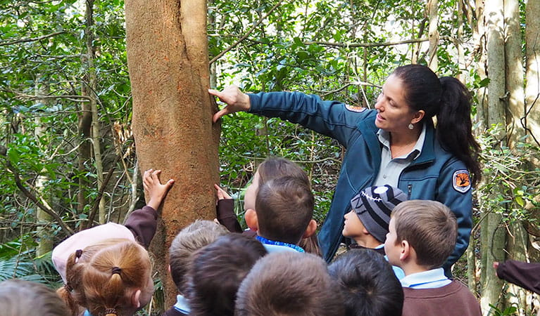 An NPWS staff member takes students on a school excursion at Minnamurra Rainforest Centre in Budderoo National Park. Photo: Meagan Vella/DPIE
