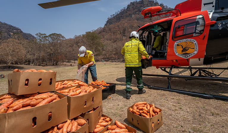 NPWS staff loading sweet potatoes and carrots into a helicopter for aerial drops to native wildlife. Photo: John Spencer/DPIE