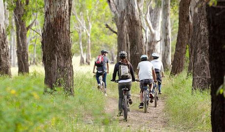 Bike riding in Murray Valley National Park. Photo: David Finnegan