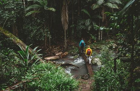 Two men walk across a stream surrounded by rainforest, Border Ranges National Park. Photo: Branden Bodman