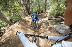 Mountain bike riders tackle a descent through forest on Thredbo Valley track, Kosciuszko National Park. Photo: Boen Ferguson/DPIE