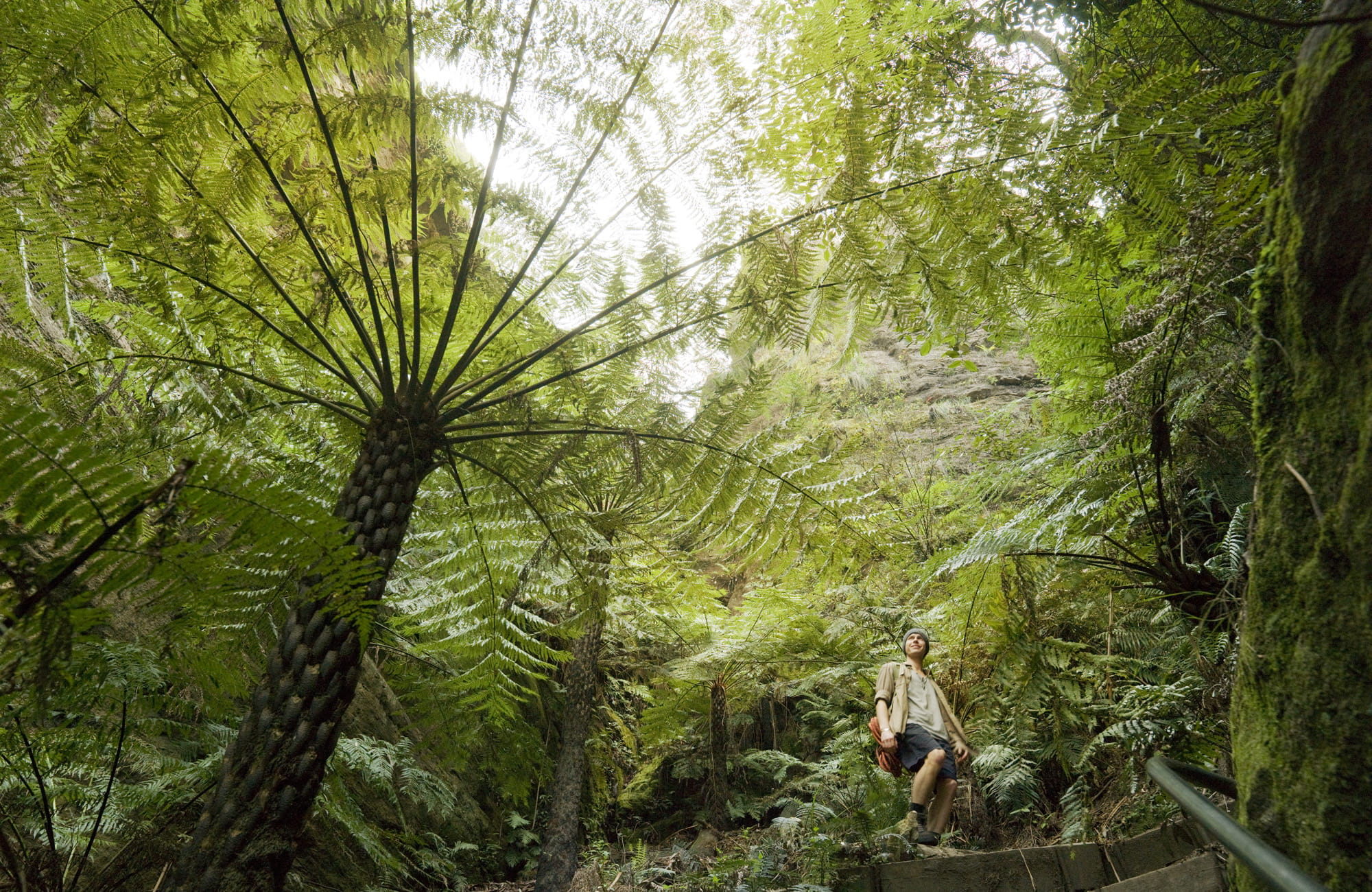 Ferns in Blue Mountains National Park. Photo: David Finnegan