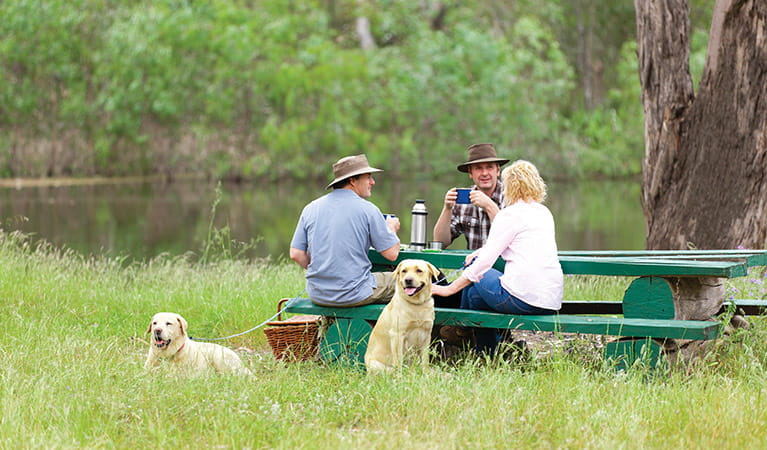 Two dogs sit beside a group of people at a picnic table, Gulpa Island, Murray Valley Regional Park. Photo: David Finnegan © DPIE