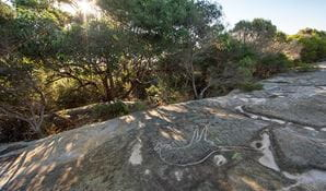 Aboriginal engravings in Royal National Park. Photo: David Finnegan