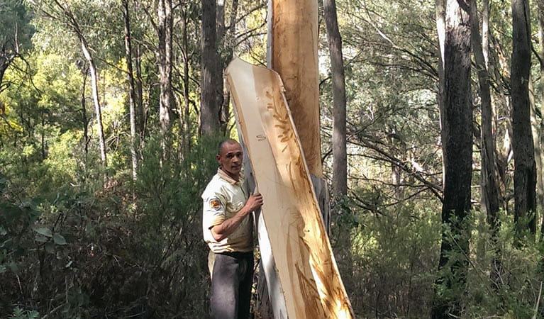 Aboriginal Discovery ranger carving the bark from a tree, Kosciuszko National Park. Photo: Talea Bulger