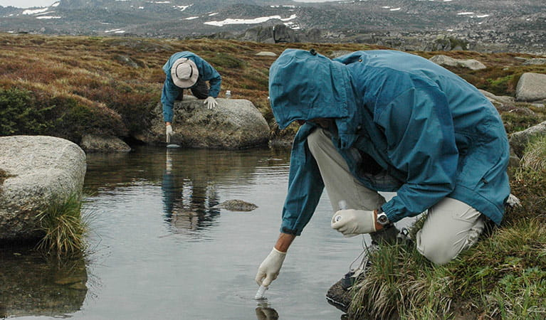 Taking freshwater samples from the Snowy River, Kosciuszko National Park. Photo: Tim Pritchard