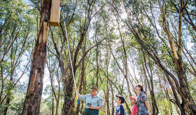 NSW National Parks staff checking nest boxes in Warrumbungle National Park. Photo: Erin Roger