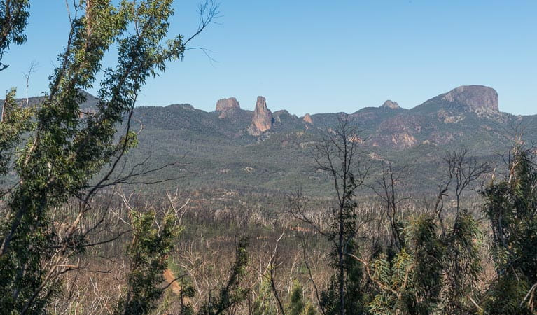 Post fire, Warrumbungle National Park. Photo: John Spencer
