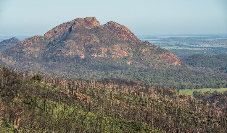 Post fires, Warrumbungle National Park. Photo: John Spencer