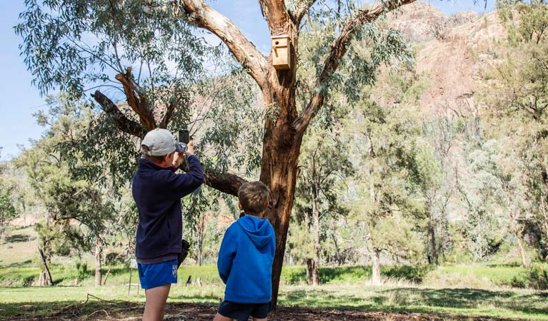 Nest boxes provide habitat for fire-affected animals in Warrumbungle National Park. Photo: Simone Cottrell/OEH.
