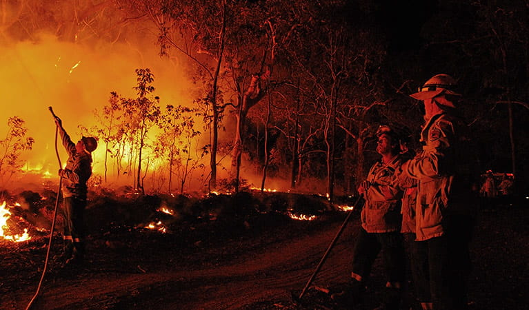 Firefighters at work, Wollemi National Park. Photo: Michael Jarman