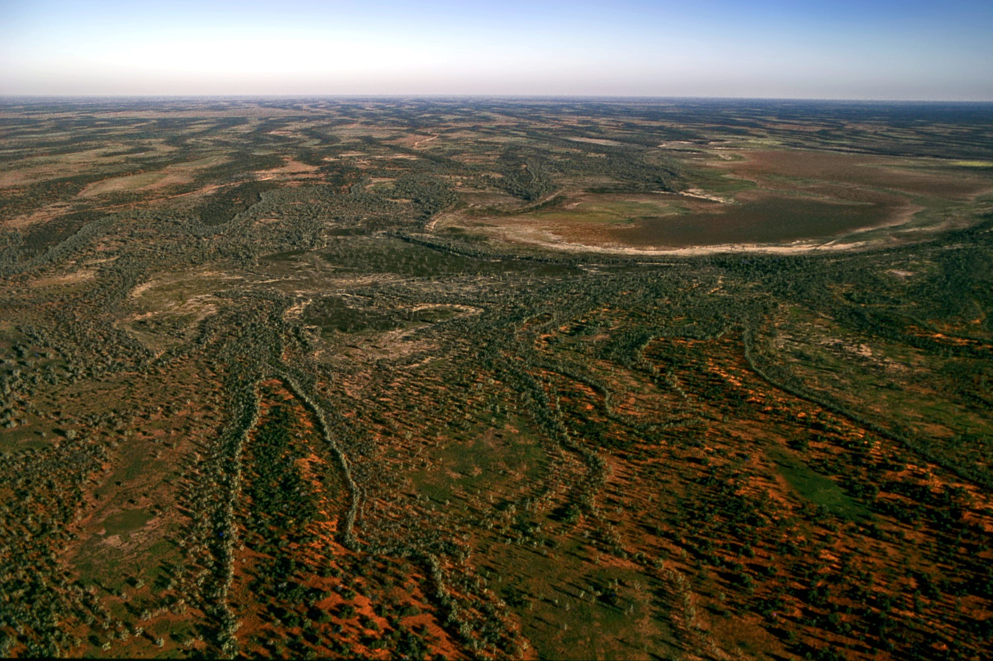Mulga on dunes in Sturt National Park. Photo: Graham Robertson/OEH