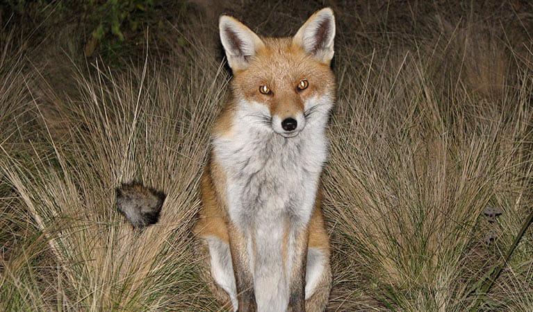silver fox on Tumblr