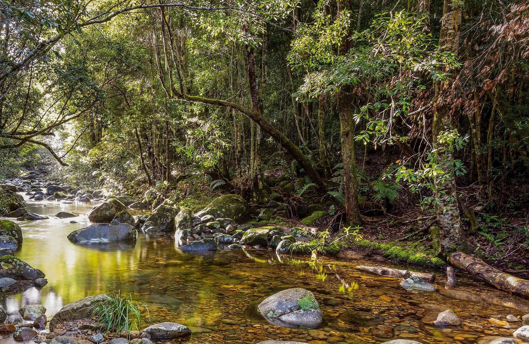 Washpool walk, Washpool National Park. Photo: Rob Cleary