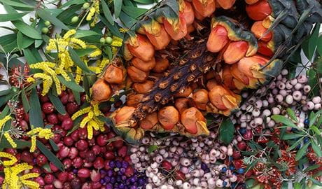 Bush tucker. Photo: The Royal Botanic Gardens and Domain Trust/Jaime Plaza