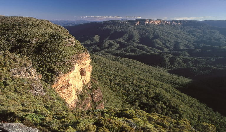 Blue Mountains National Park. Photo: Jeremy Little/OEH