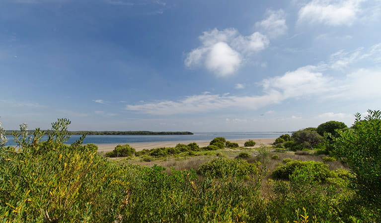 Quibrary Bay viewing platform, Towra Point Nature Reserve. Photo: John Spencer