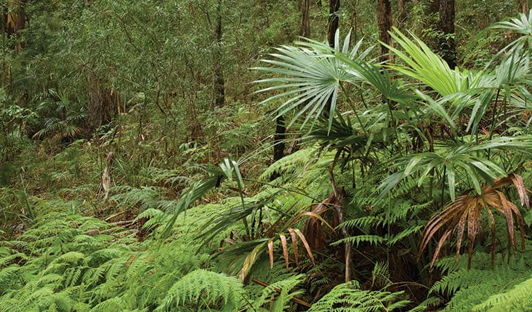 Booti Booti Hill walk, Booti Booti National Park. Photo: Ian Brown