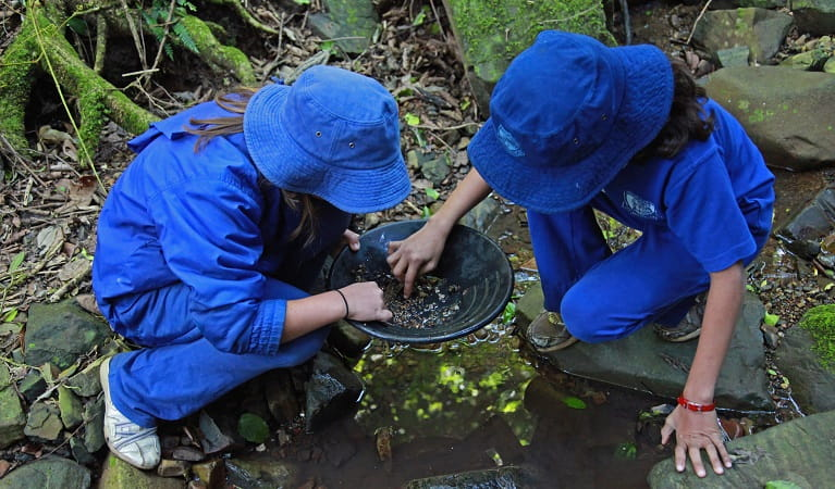 Looking for gold in the pan, Copeland Tops State Conservation Area. Photo: Shani Milgate/OEH