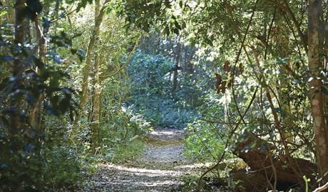 Photo of a path through the rainforest, Iluka Nature Reserve. Photo: Nick Cubbin/OEH