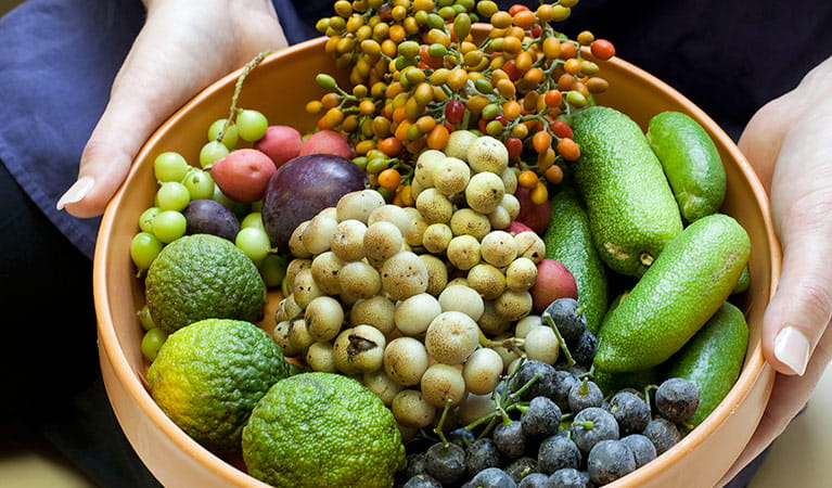 Rainforest seeds and fruits. Photo: The Royal Botanic Gardens and Domain Trust/Simone Cottrell