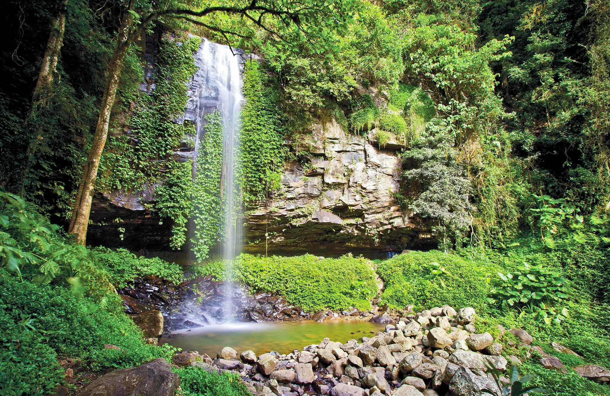 Crystal Shower Falls, Dorrigo National Park. Photo: Rob Cleary/Seen Australia