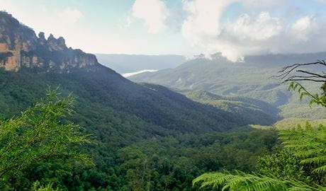 Furber Steps - Scenic Railway walking track, Blue Mountains National Park. Photo: OEH