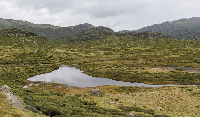 High country, Perisher to Charlotte Pass in Kosciuszko National Park. Photo: John Spencer/OEH