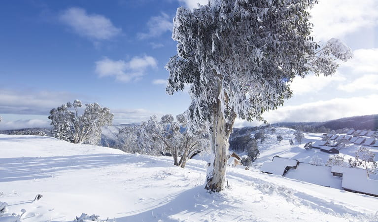 Snow covered landscape and snow gums in Kosciuszko National Park. Photo: Murray Vanderveer/OEH