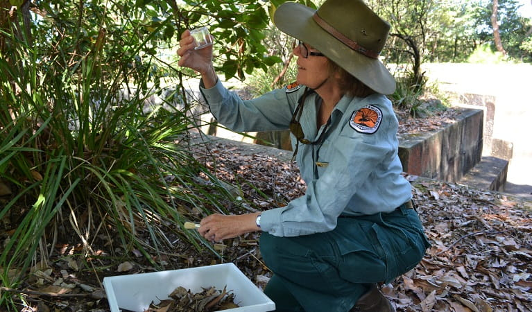 Science investigations at a WildThings primary school excursion. Photo: Julie Brown/OEH