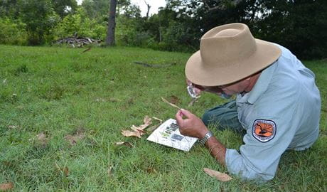 A ranger investigating the natural environment on a WildTracker school excursion. Photo: Julie Brown/OEH