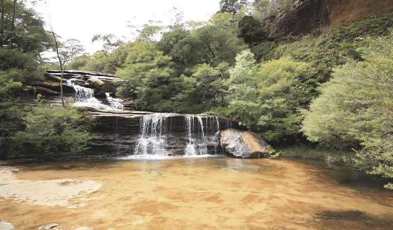 Wentworth Falls, Blue Mountains National Park. Photo: Elinor Sheargold/OEH