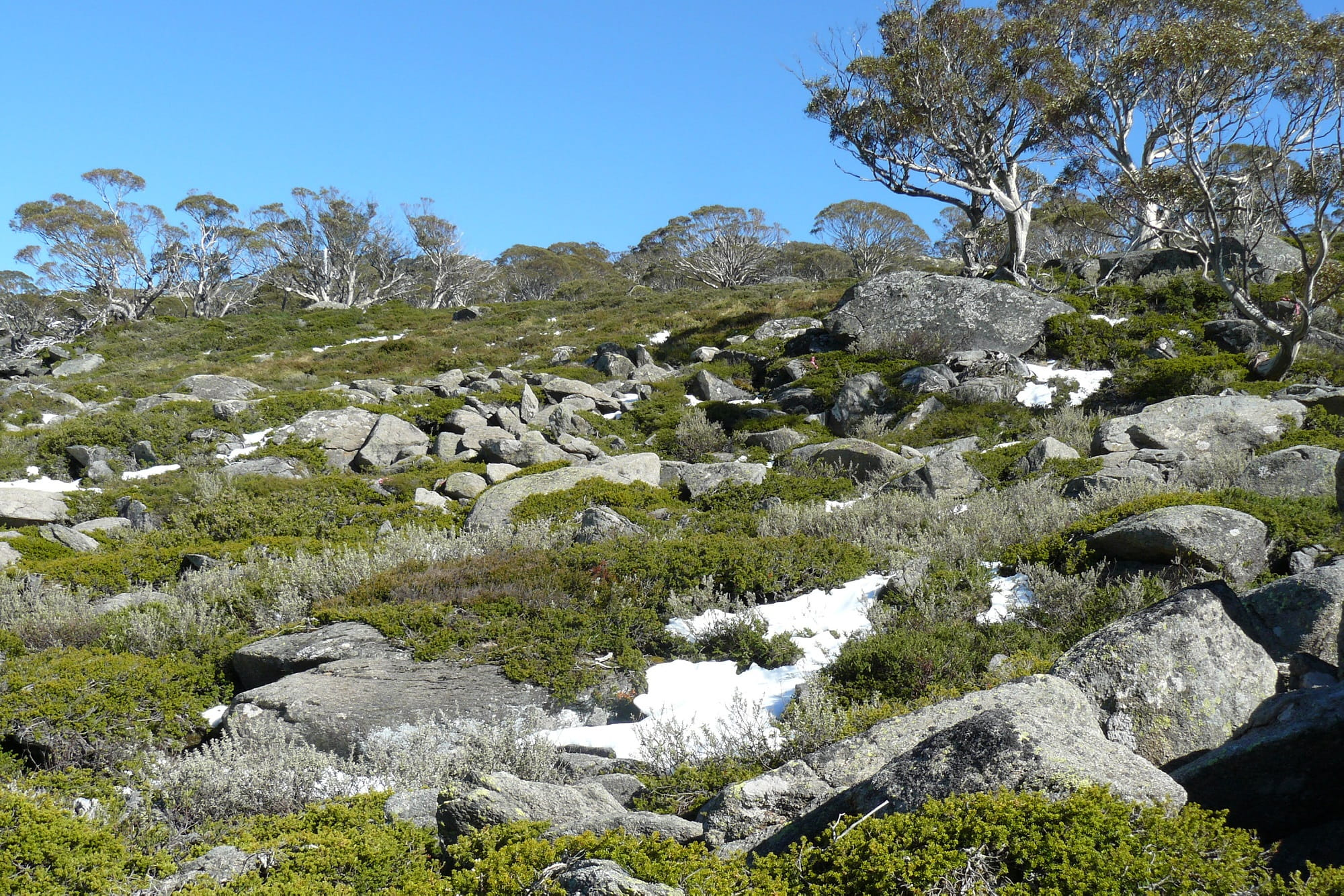 Boulder fields in Kosciuskzo National Park. Photo: Mel Schroder/OEH