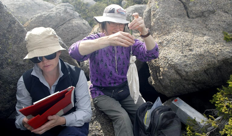 Researchers studying the Mountain pygmy possum, Kosciuszko National Park. Photo: Dan Nicholls/OEH