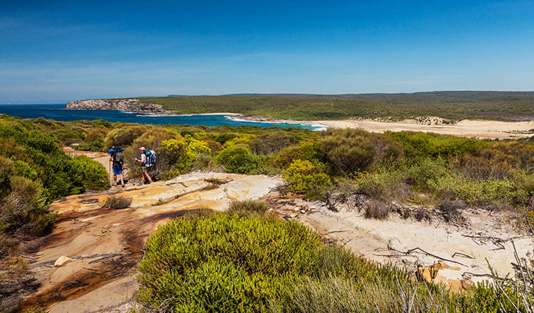 Coastal track, Royal National Park. Photo: David Finnegan