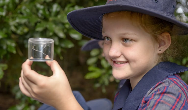 School child exploring hands-on WilderQuest activities at Dorrigo National Park Photo: John Spencer/OEH