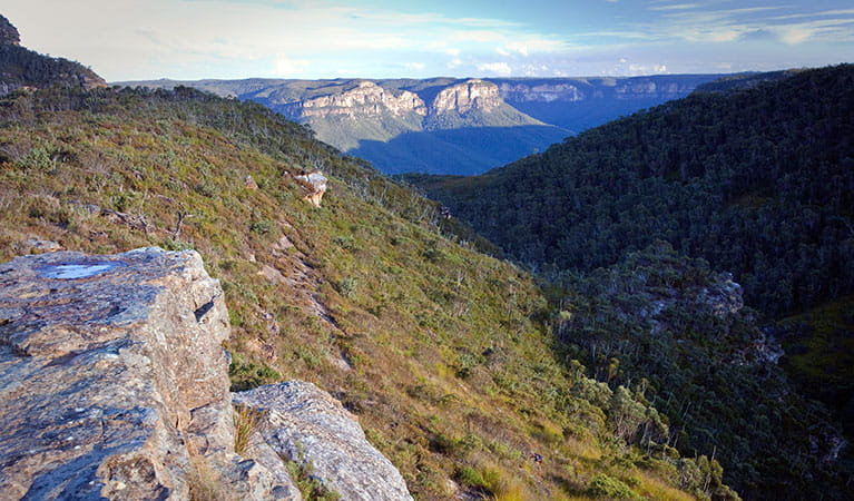 Blue Mountains National Park. Photo: Nick Cubbin
