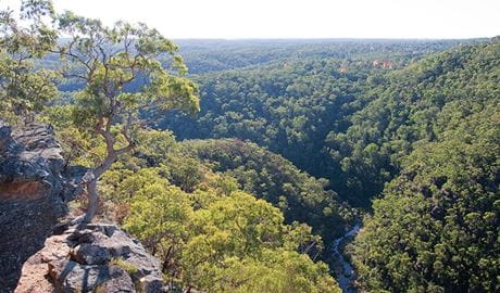 Eucalypt forests environment, Tunnel View lookout, Blue Mountains National Park. Photo: Nick Cubbin
