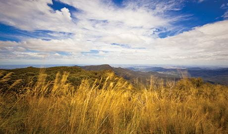 Grasslands environment, Mount Kaputar summit lookout, Mount Kaputar National Park. Photo: Rob Cleary/Seen Australia