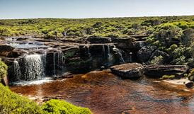 Heathlands environment, Eagle Rock, Royal National Park. Photo: David Finnegan