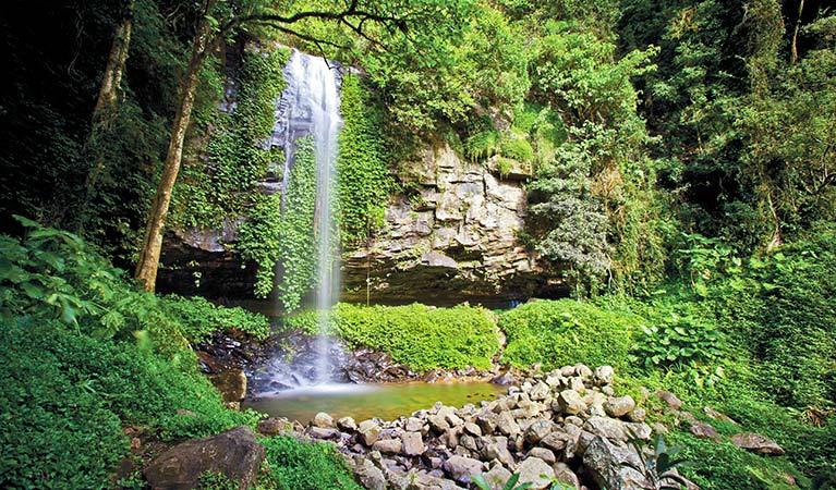 Rainforest environment, Crystal Shower Falls, Dorrigo National Park. Photo: Rob Cleary/Seen Australia