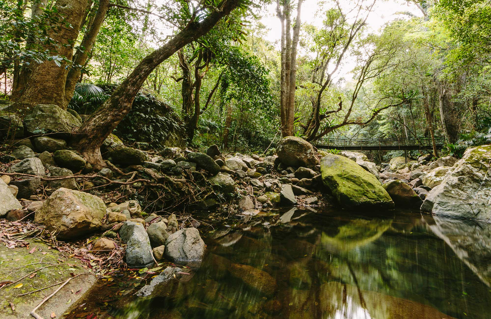 Minnamaurra Rainforest, Budderoo National Park. Photo: David Finnegan