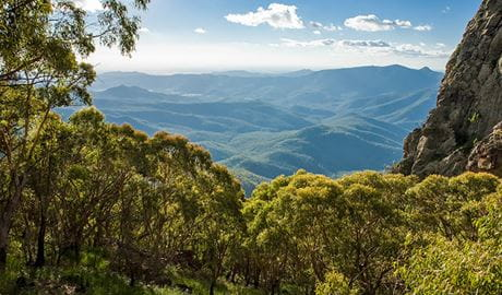 Woodlands environment, West Kaputar lookout, Mount Kaputar National Park. Photo: Ian Brown
