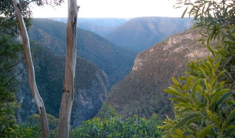View of Slot Canyon from Adams Lookout, Bungonia National Park. Photo: Audrey Kutzner/NSW Government