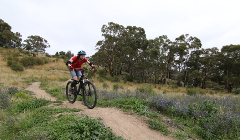 Student riding their mountain bike over a crest in the trail. Photo: L. Kneller/Action Learning Initiatives