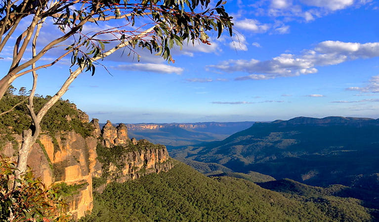 View past a gum tree to cliff bands with the Three Sisters rock formations n the background. Photo credit: Ben Matthews © Autopia Tours