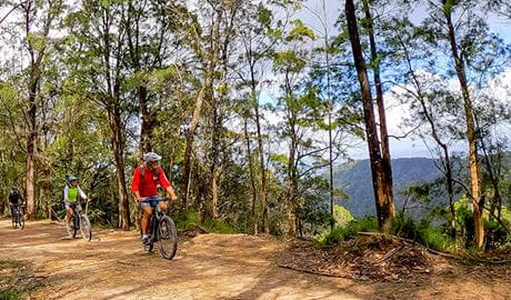 3 cyclists ride through forest along a dirt track with mountain and valley views. Photo credit: Steve Back © Beyond Byron E Bikes