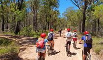 A group of mountain bikers follows a guide along a fire trail through Blue Mountains bushland.  Photo credit: Sam Carr © Blue Mountains Biking Adventures